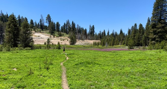 Meadow at Sequoia National Park