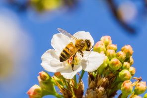Welcoming Bees to Your Outdoor Space Image