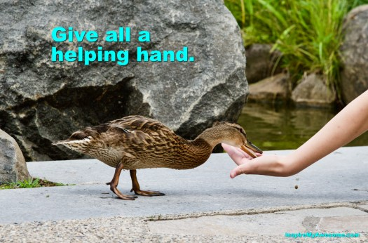 Picture of a person offering food to a duck.