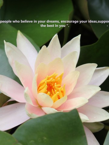 quotes about surrounding yourself with positivity