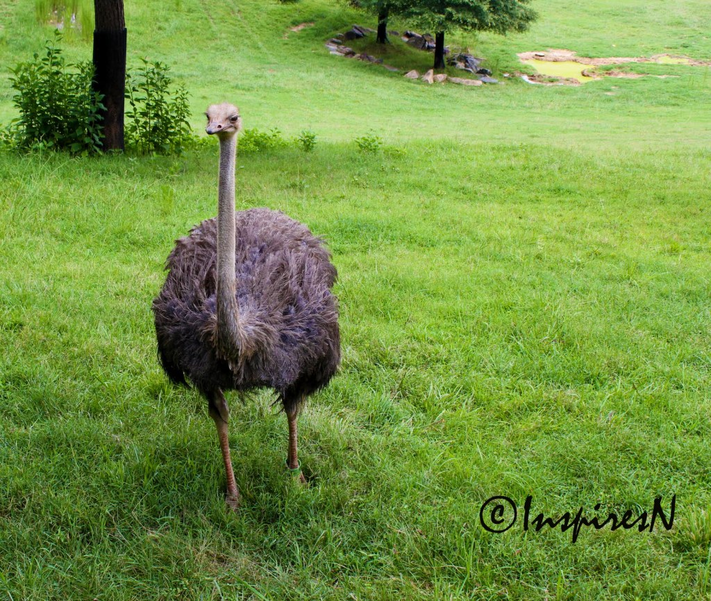Photos Of The Day - Ostrich