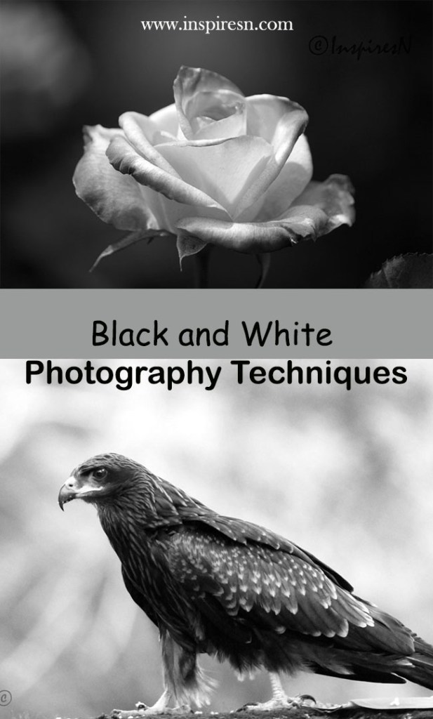 black and white photography techniques