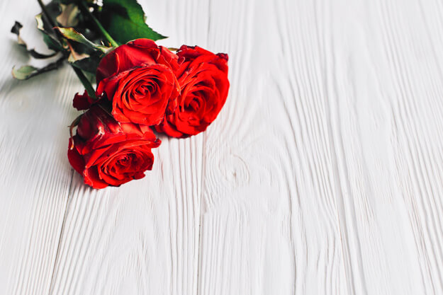 Gambar bunga mawar cantik dan indah dengan beragam klasifikasi dan jenis-jenisnya