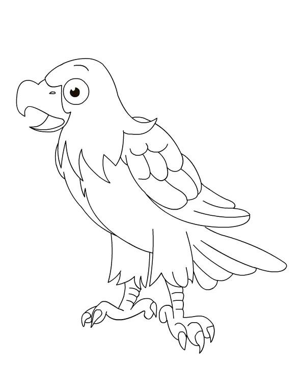 gambar mewarnai hewan burung elang