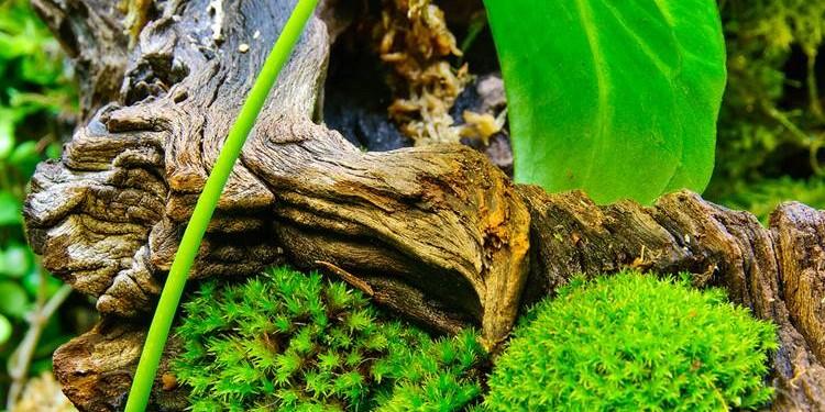 manfaat kayu jati untuk aqua space