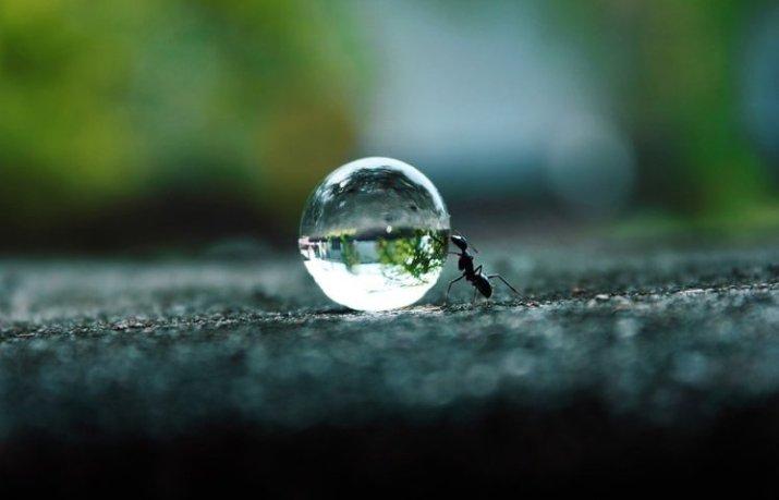 gambar semut mendorong air
