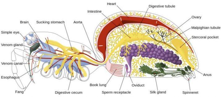 sistem saraf