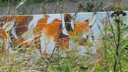 Fox in the Undergrowth