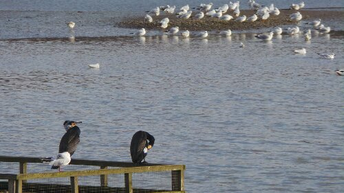 Some Commerants chilling out on the RSPB nature reserve near Trinity Buoy Wharf