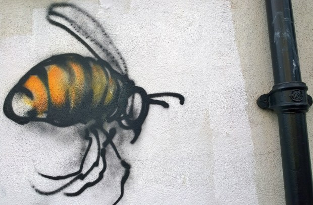 Bee by Jim Vision on Vallance Road