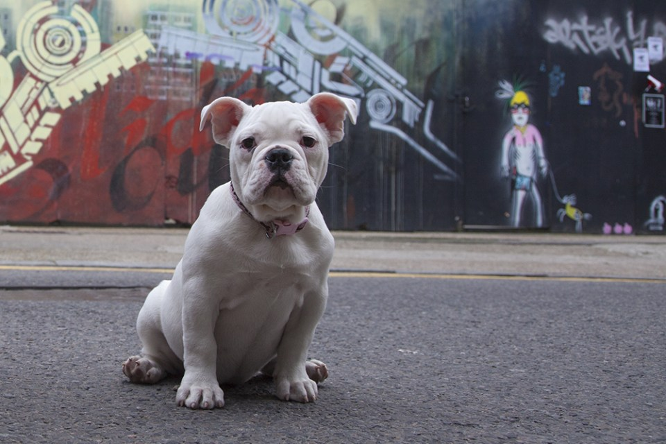 A dog poses next to work from Dale Grimshaw and Art is Trash on Hanbury Street