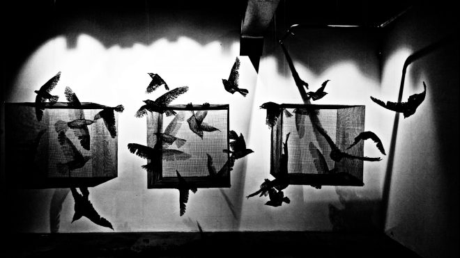 Birds are caged as others fly free