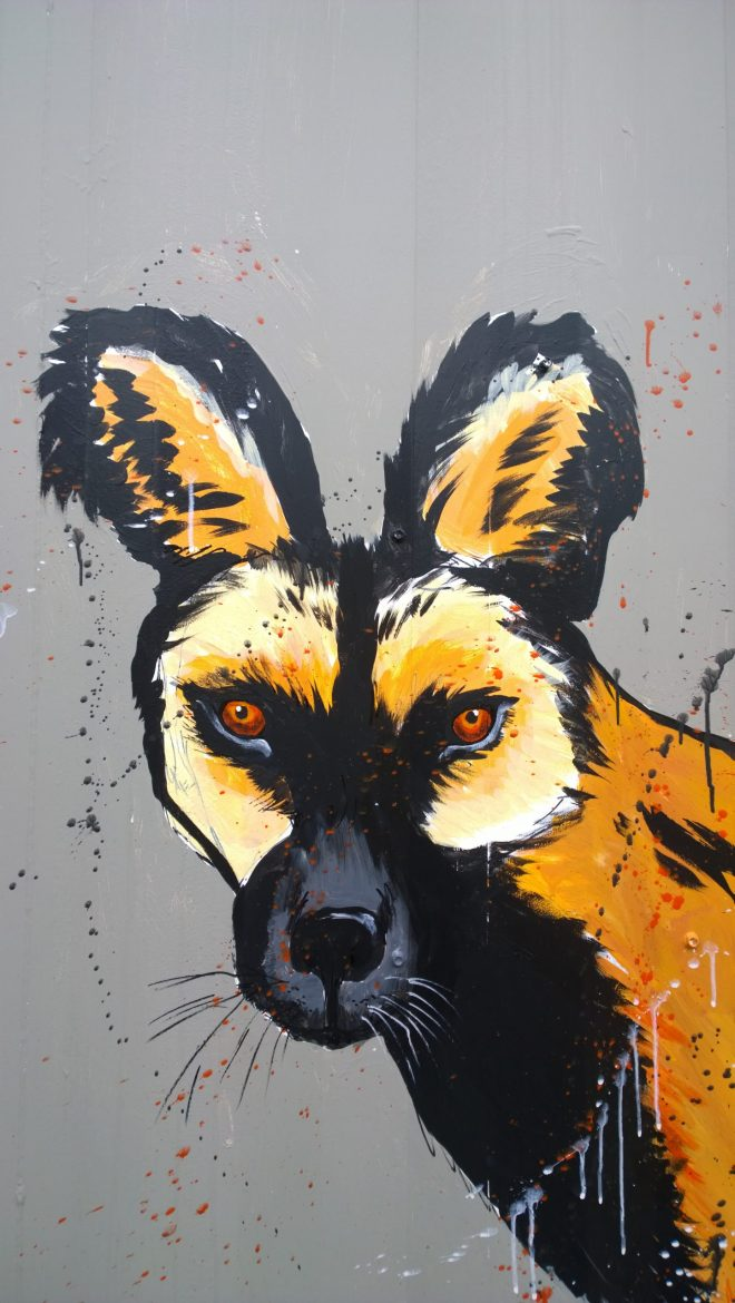 Close up of Mutiny's African Wild Dog