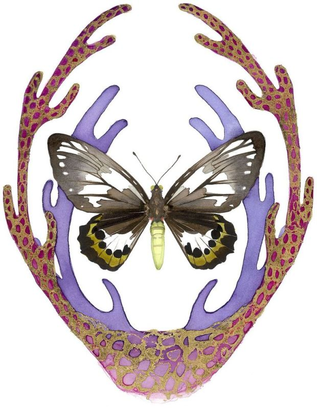 Butterfly Kate Knight
