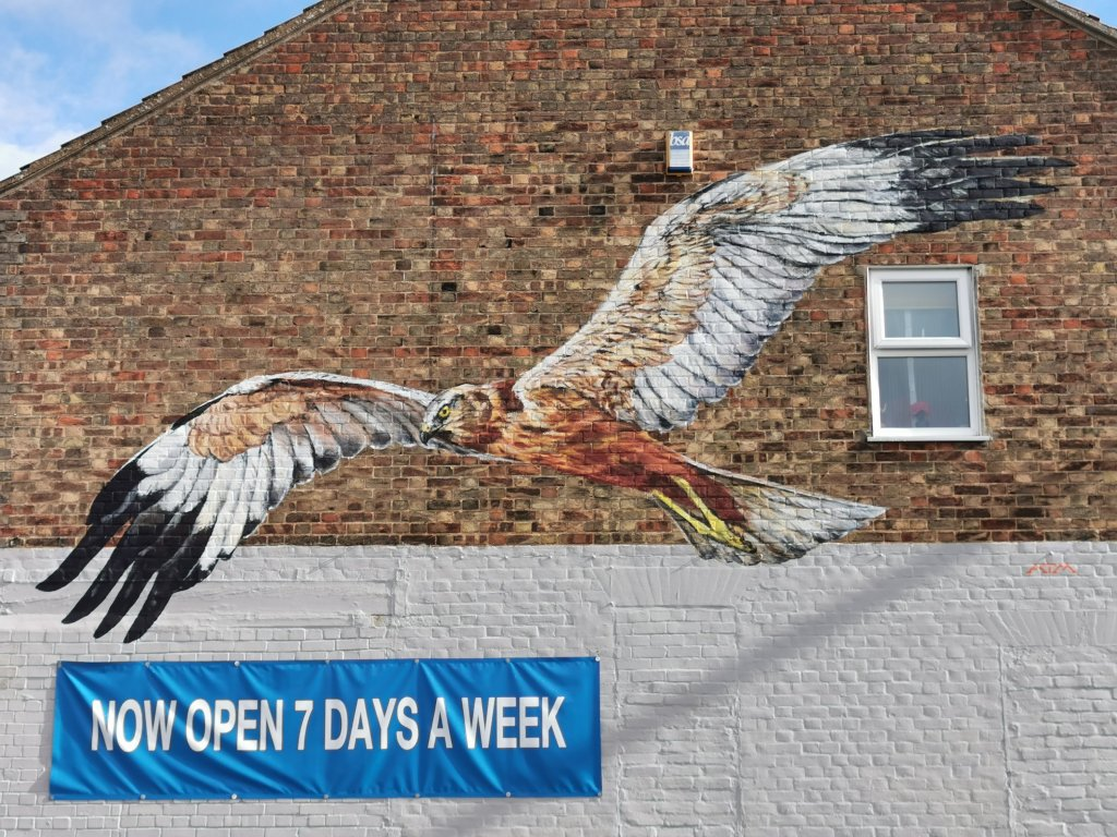 Marsh Harrier mural in Lowestoft by ATM
