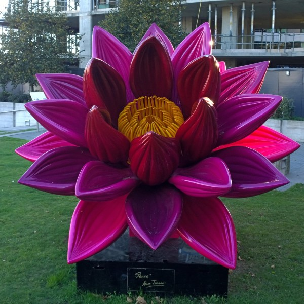 Ana Tzarev Love & Peace Campaign Places Giant Flower