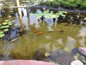 Inspiring Kitchen Casa Velas koi pond
