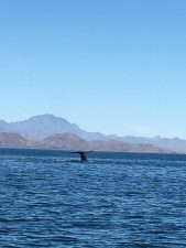 Exploring the Sapphire Blue Waters and History of Loreto, Mexico