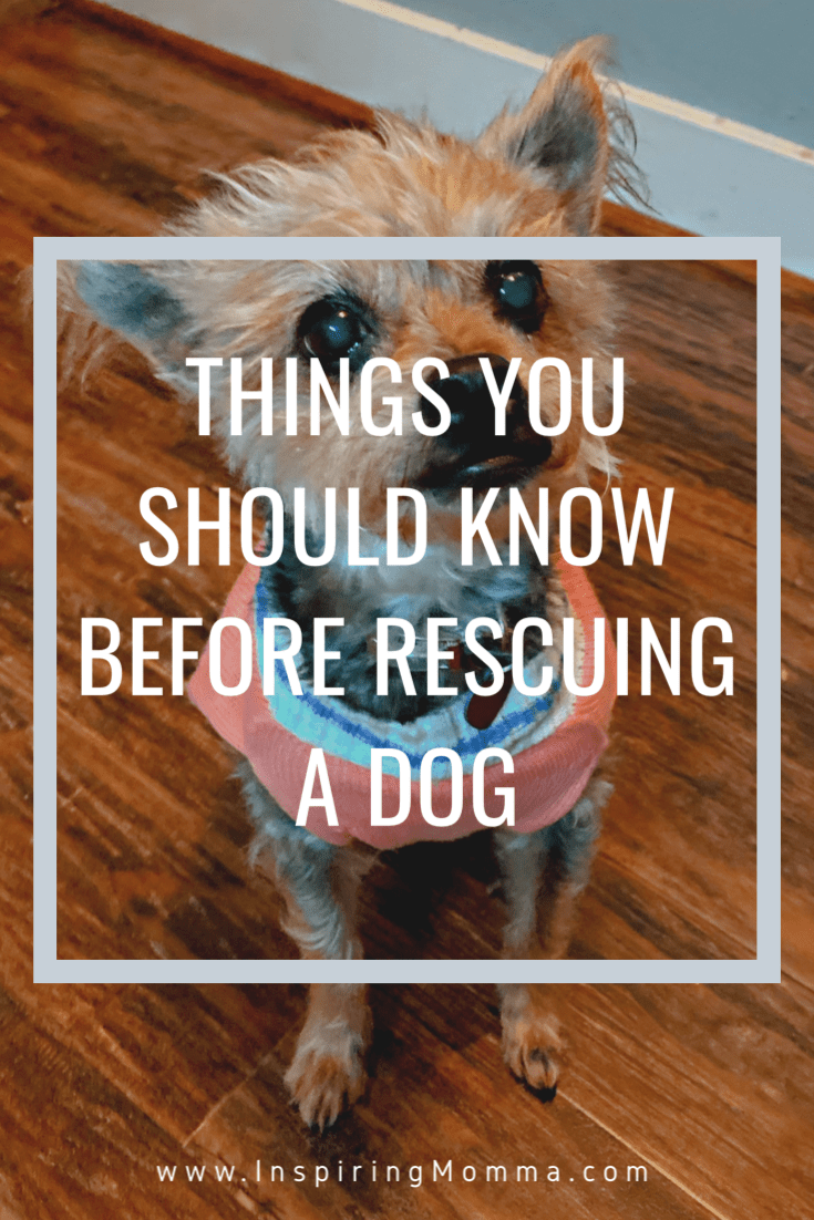 Things You Should Know Before Rescuing a Dog