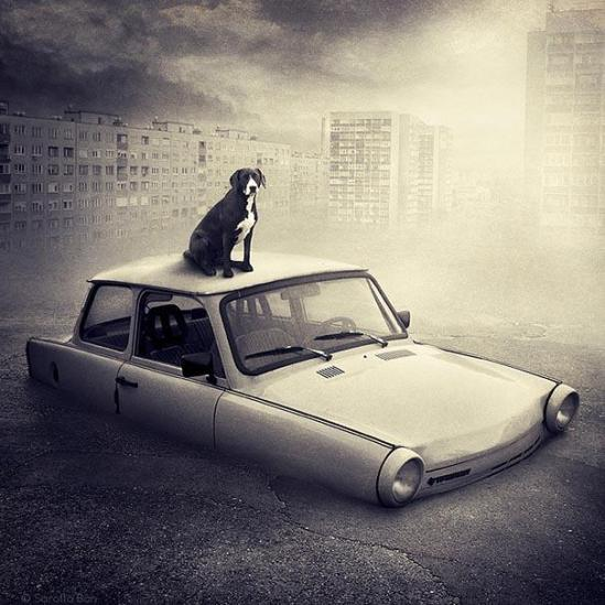 Artist Creates Surreal Pictures With Shelter Animals