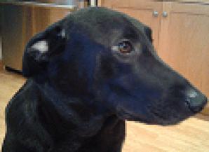 Baxter head