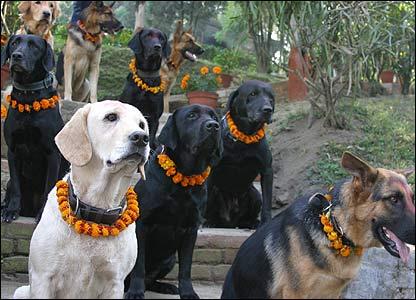44227089 dogs416 rU1qG 7511