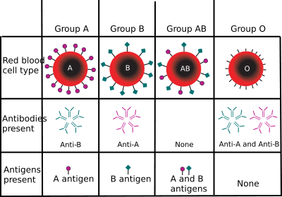blood types 8329