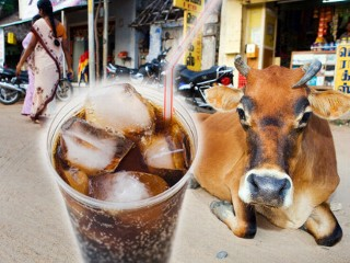 cow cola 090213 mn oinrq 3868 5ZDH8 3868