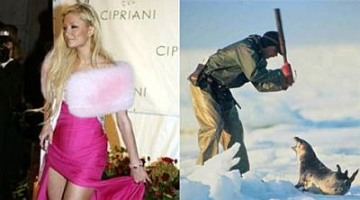 fur fashion 18