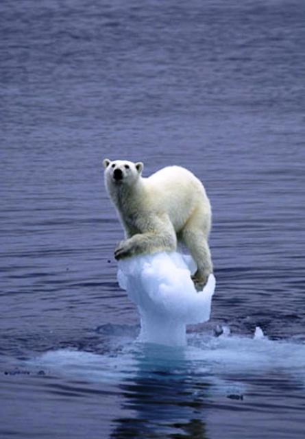 global warming pic lzf2h 23036