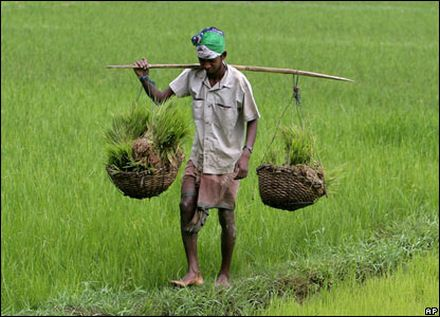 india agricultural growth