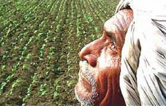 indian farmer suicides 11542 oHaaG 6943
