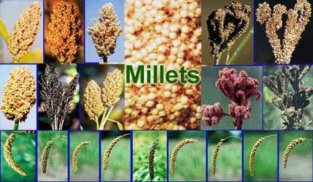 millets 7613