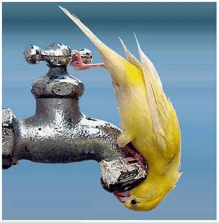 precious water WRkBa 6854