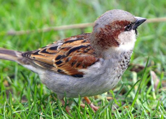 sparrow tRZgJ 6943