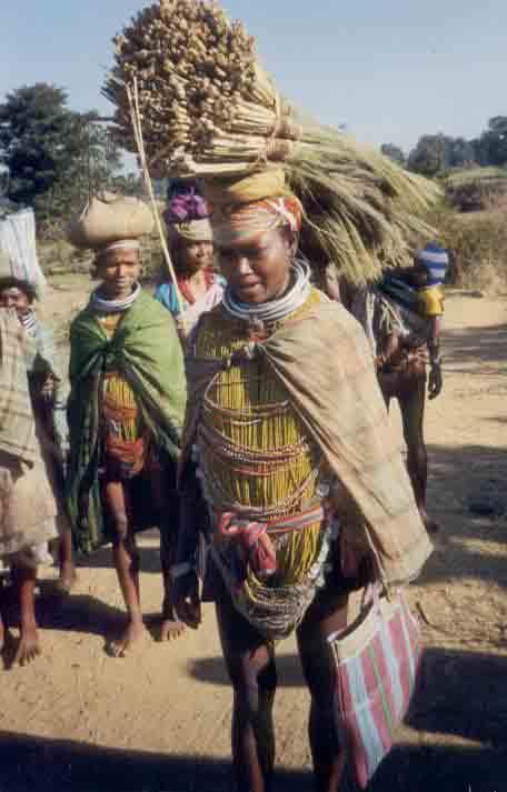 tribals in orissa