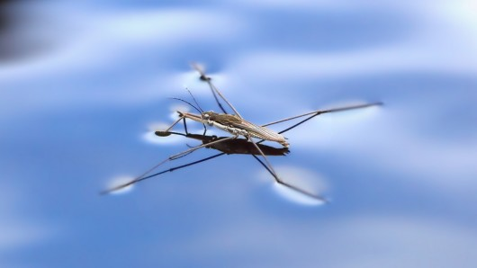 water_strider_robot-1