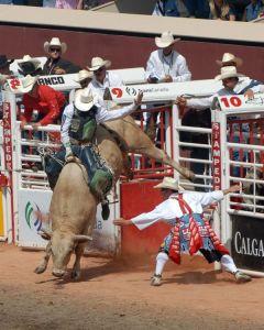 Bull-Riding-Szmurlo