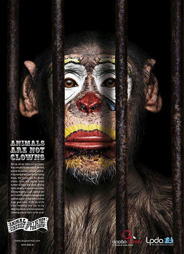 Animals are not jokers