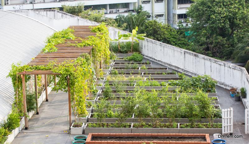 raised bed Vegetable-Garden