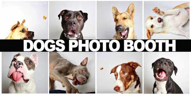 DOGS-PHOTOBOOTHjpg