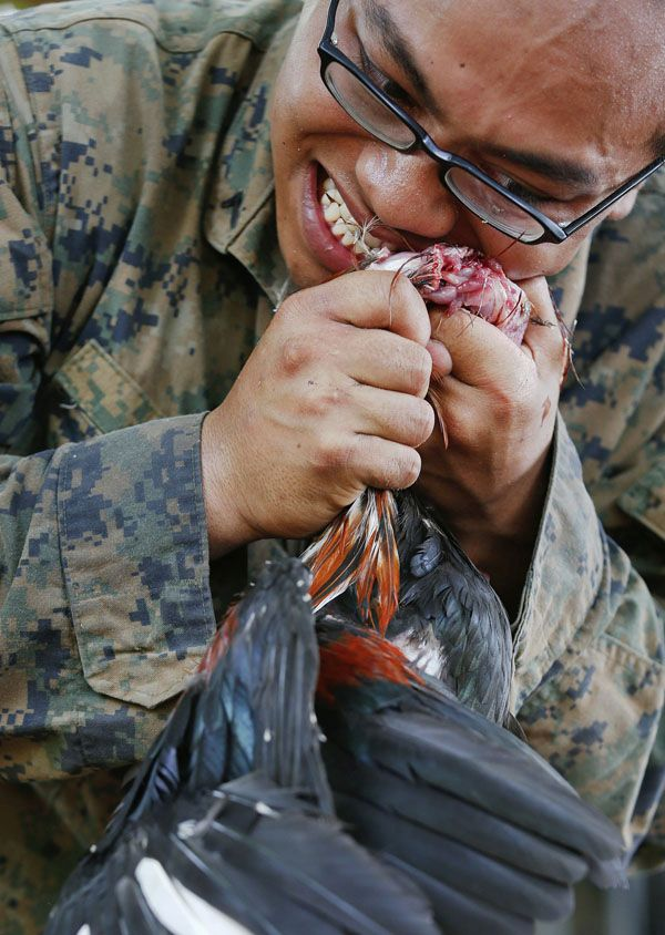 """A U.S. Marine kills a chicken with his teeth during a jungle survival exercise with the Thai Navy as part of the """"Cobra Gold 2013"""" joint military exercise, at a military base in Chon Buri province February 20, 2013. About 13,000 soldiers from seven countries, Thailand, U.S., Singapore, Indonesia, Japan, South Korea and Malaysia are participating in the 11-day military exercise. REUTERS/Damir Sagolj (THAILAND - Tags: POLITICS MILITARY SOCIETY)"""