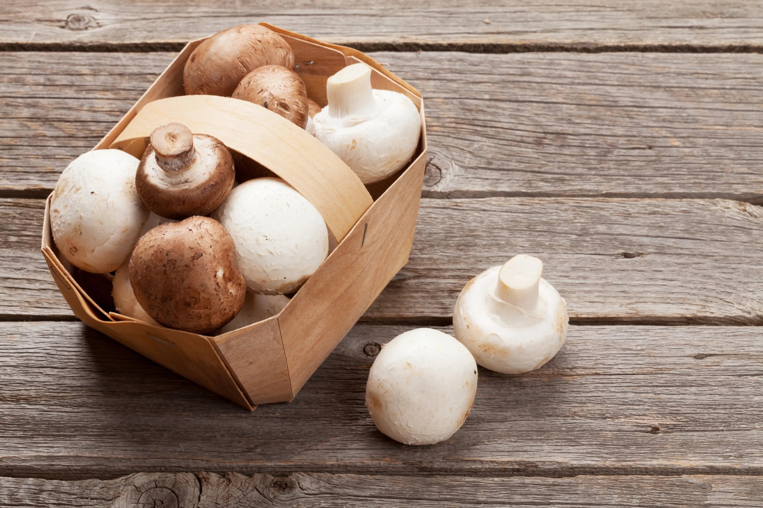 Growing Button Mushrooms at Home - Insta Mushrooms