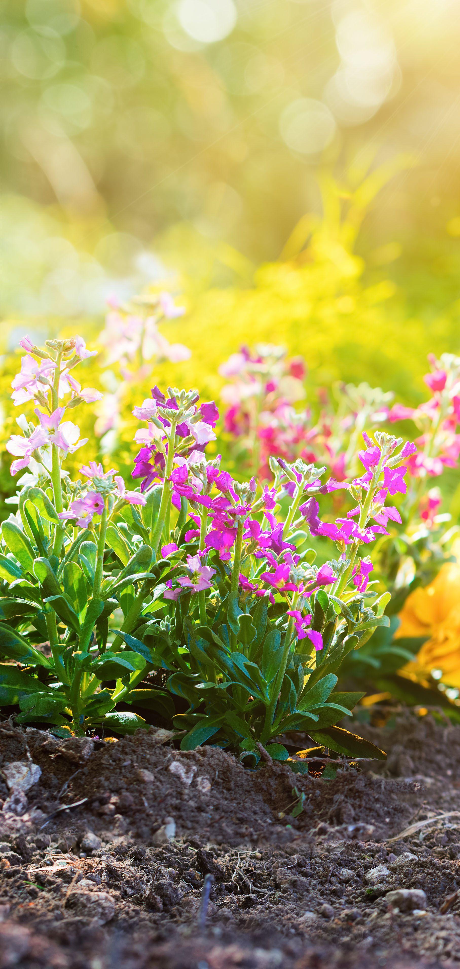 Blumen mit Sonnenschein im Garten