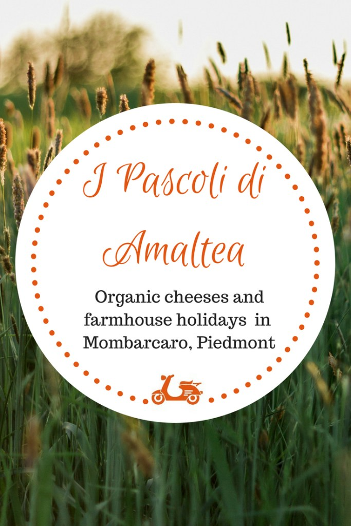 The Italian countryside offers you a lot of incredible gems, if you are willing to explore. In this post, I take you to I Pascoli di Amaltea, an organic farm in the amazing Alta Langa, Piedmont