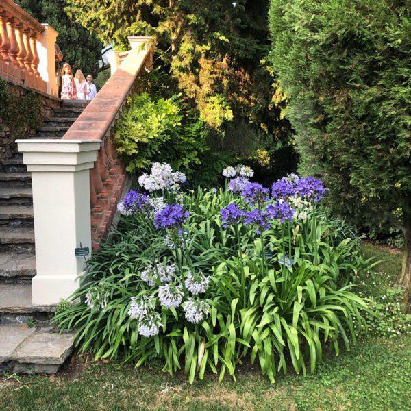 Villa della Pergola, stair and agapanthus