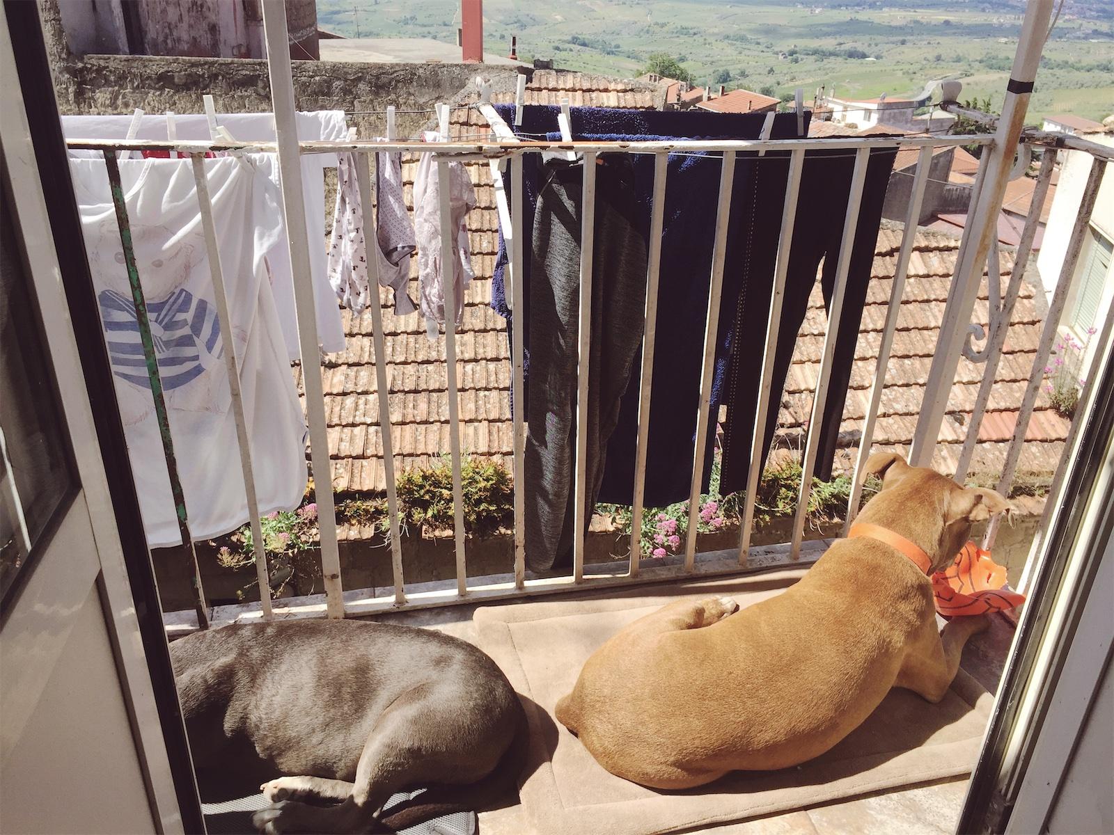 Two dogs living la bella vita