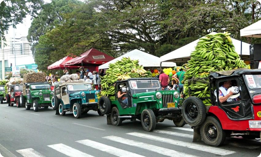 Fila de jeeps cargadas de bananos en el desfile del Yipao en Armenia