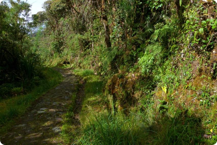 camino hacia los termales de san juan en el parque natural Puracé