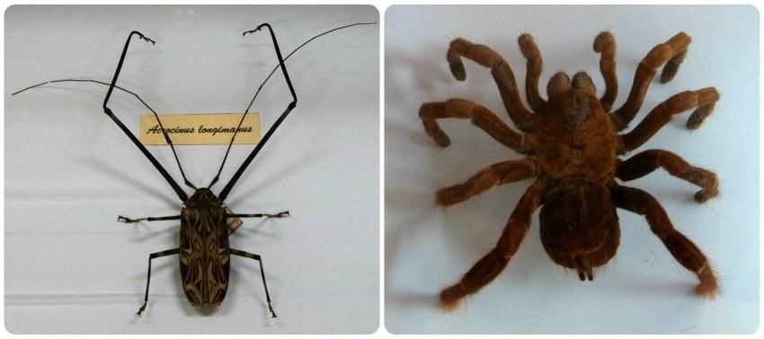 Coleóptero y araña en el Museo de historia natural de Popayán